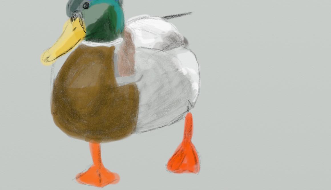 duck 20190211