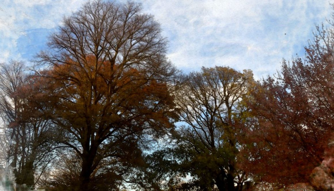 late-afternoon-tree-canopy