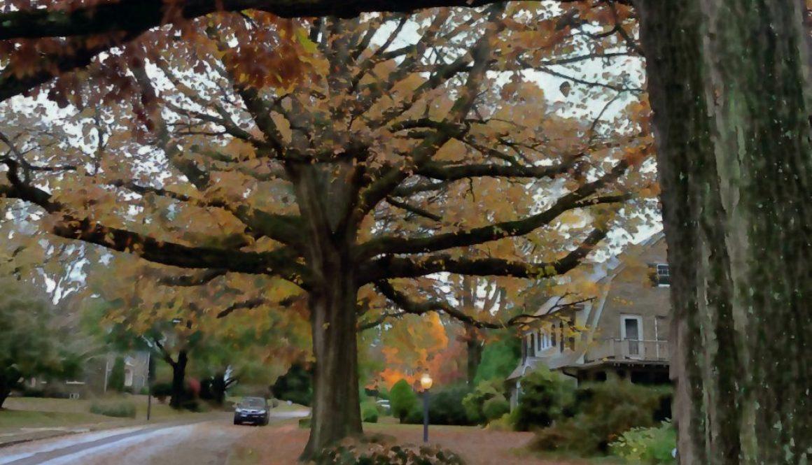 vernon trees2_crop